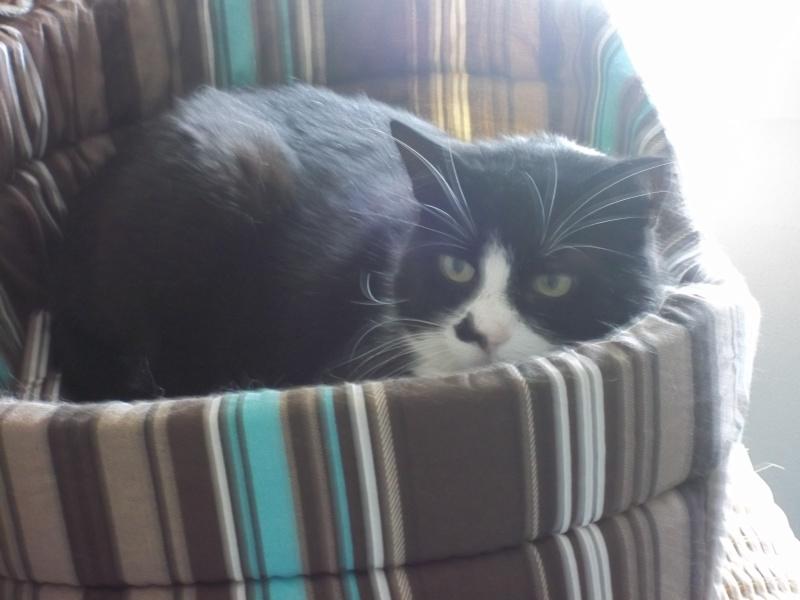 Nos positifs !! 45 amours de chats à adopter 000_0014