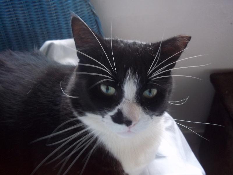 Nos positifs !! 45 amours de chats à adopter Domdom12