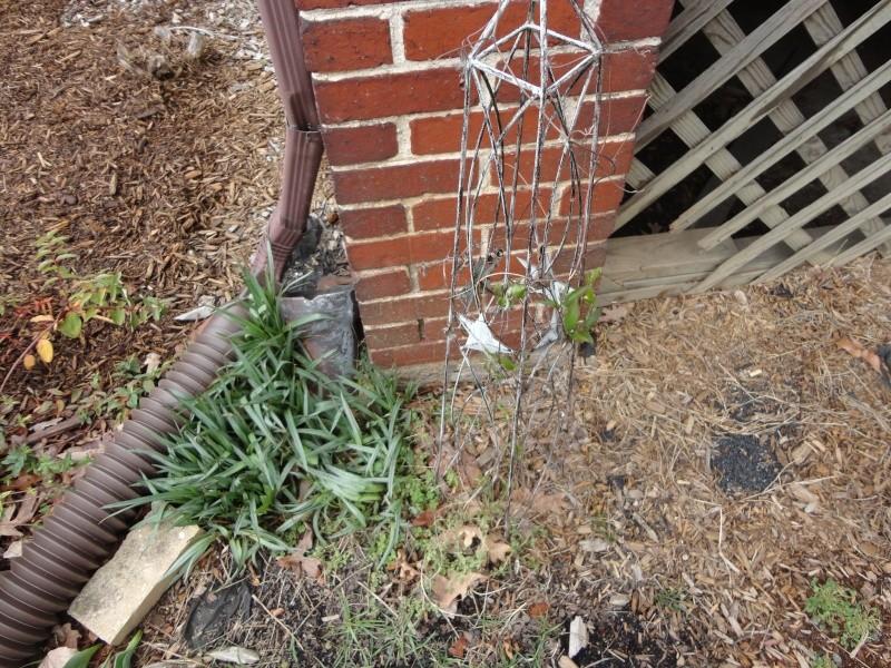 Shannon's Gardening Thread 2012 Dsc00112