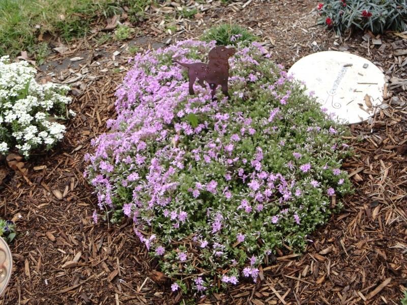 Shannon's Gardening Thread 2012 Dsc00115