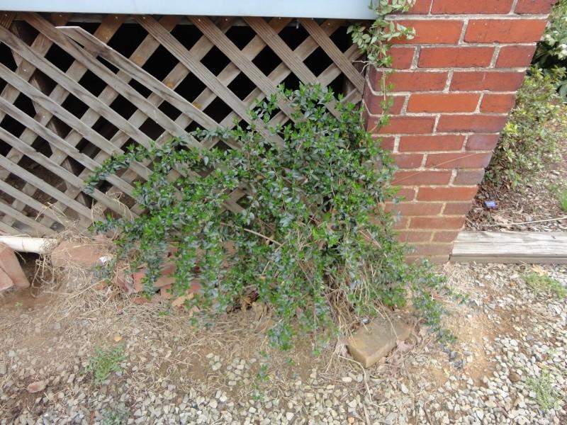 Shannon's Gardening Thread 2012 Dsc00119