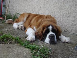 [Sondage] Top 10 des chiens les plus impressionants Dsc01285