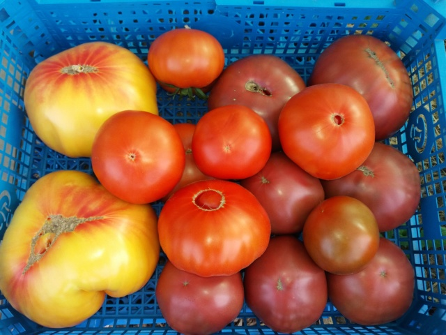 Tomates 2018 - Page 10 20180831