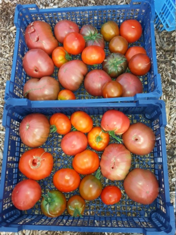 Tomates 2018 - Page 13 20180856