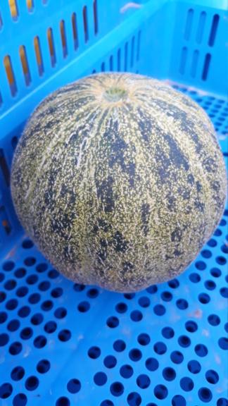 melon - Page 24 20200712