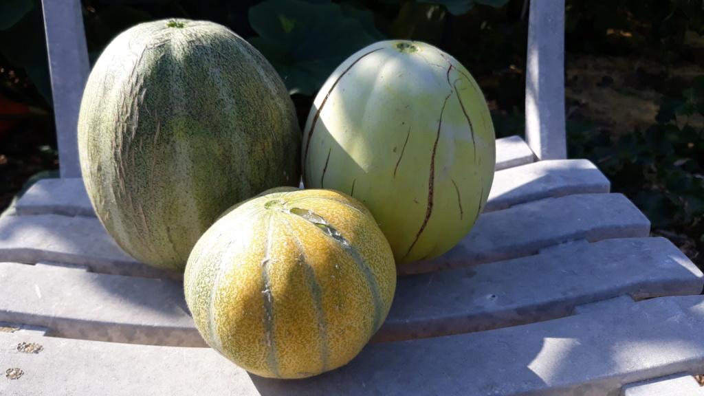 melon - Page 25 20200817