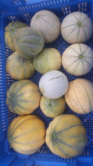 melon - Page 26 20200827