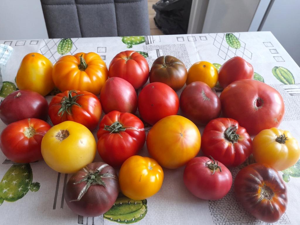 Tomates 2019 - 2020 et 2021 - Page 31 20210831