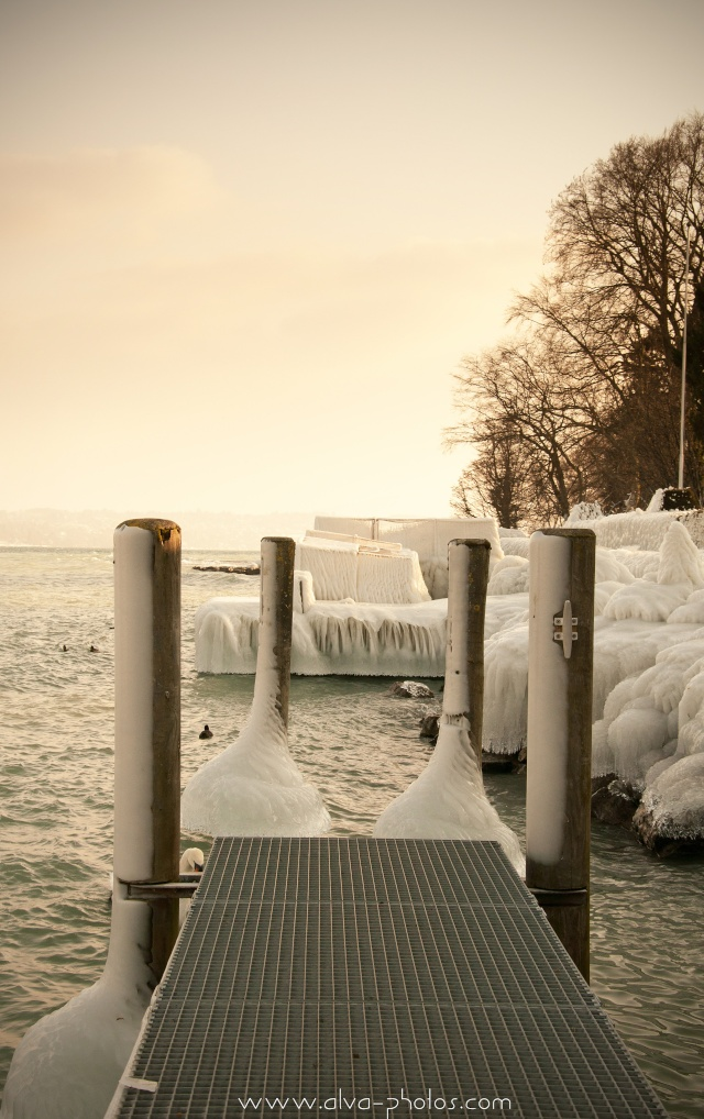 Froid Glacial  _dsc0031