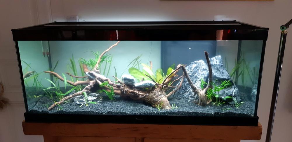Marianne38 présentation de mon aquarium Aquari10