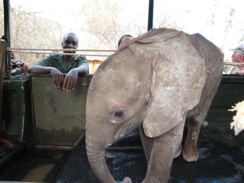 The David Sheldrick Wildlife Trust - Nursery per piccoli elefanti e rinoceronti Dsc00111