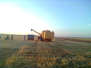موسم الحصاد في تلمنس 54510