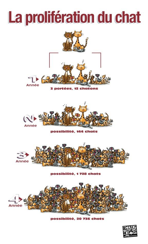 Pourquoi faire stériliser votre chat ? Prolif10