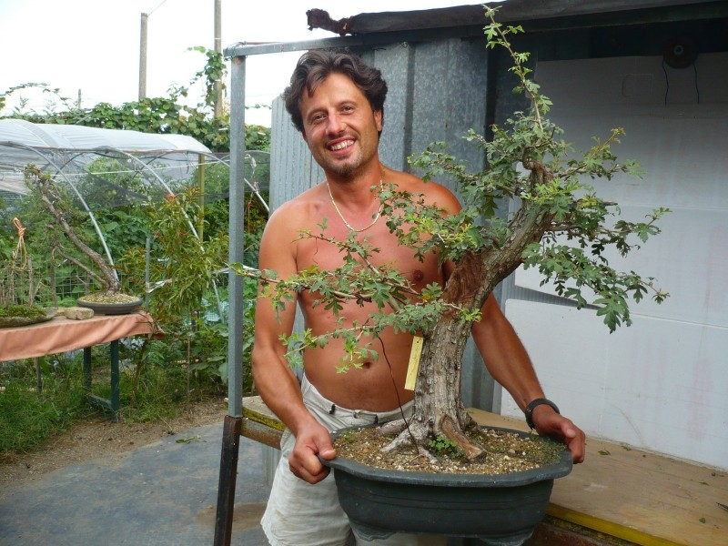 Un biancospino che diventa bonsai...... - Pagina 3 P1060455