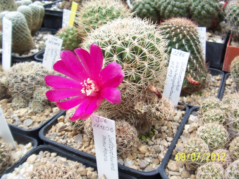 Cacti and Sukkulent in Köln, every day new flowers in the greenhouse Part 4 Bild6726