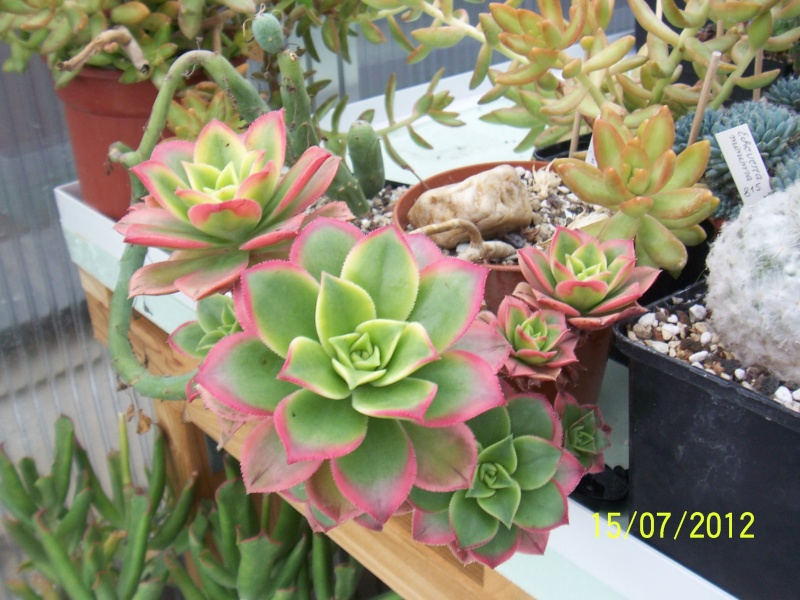 Cacti and Sukkulent in Köln, every day new flowers in the greenhouse Part 7 Bild6790