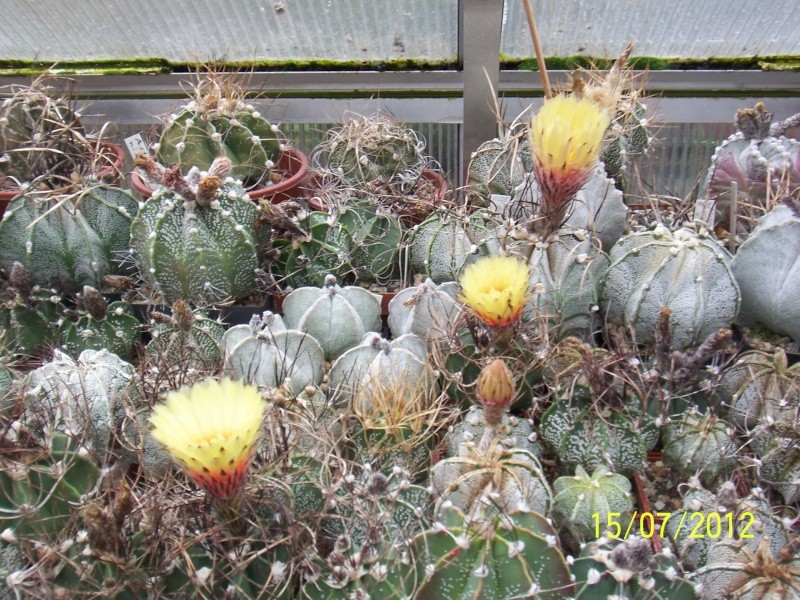 Cacti and Sukkulent in Köln, every day new flowers in the greenhouse Part 7 Bild6791