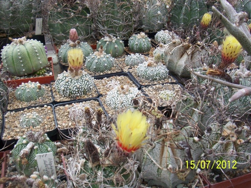 Cacti and Sukkulent in Köln, every day new flowers in the greenhouse Part 7 Bild6793