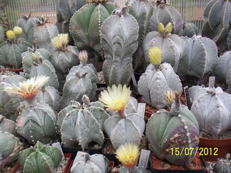 Cacti and Sukkulent in Köln, every day new flowers in the greenhouse Part 7 Bild6794