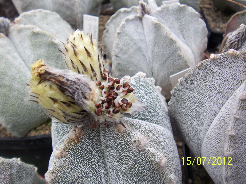 Cacti and Sukkulent in Köln, every day new flowers in the greenhouse Part 7 Bild6795