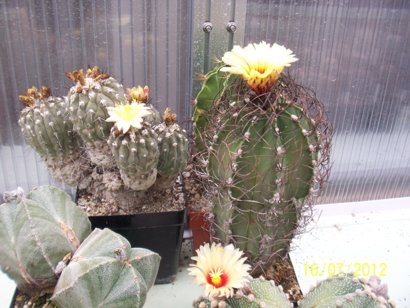 Cacti and Sukkulent in Köln, every day new flowers in the greenhouse Part 8 Bild6821
