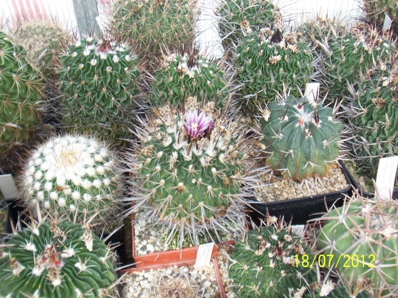 Cacti and Sukkulent in Köln, every day new flowers in the greenhouse Part 9 Bild6873
