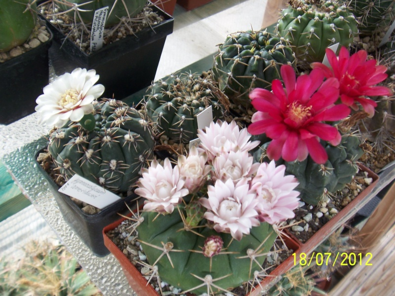 Cacti and Sukkulent in Köln, every day new flowers in the greenhouse Part 10  Bild6878