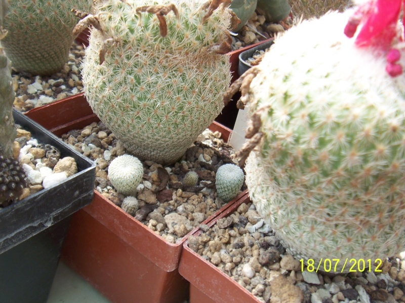 Cacti and Sukkulent in Köln, every day new flowers in the greenhouse Part 10  Bild6884