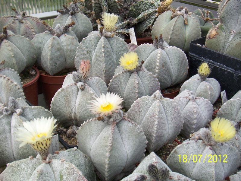 Cacti and Sukkulent in Köln, every day new flowers in the greenhouse Part 10  Bild6885