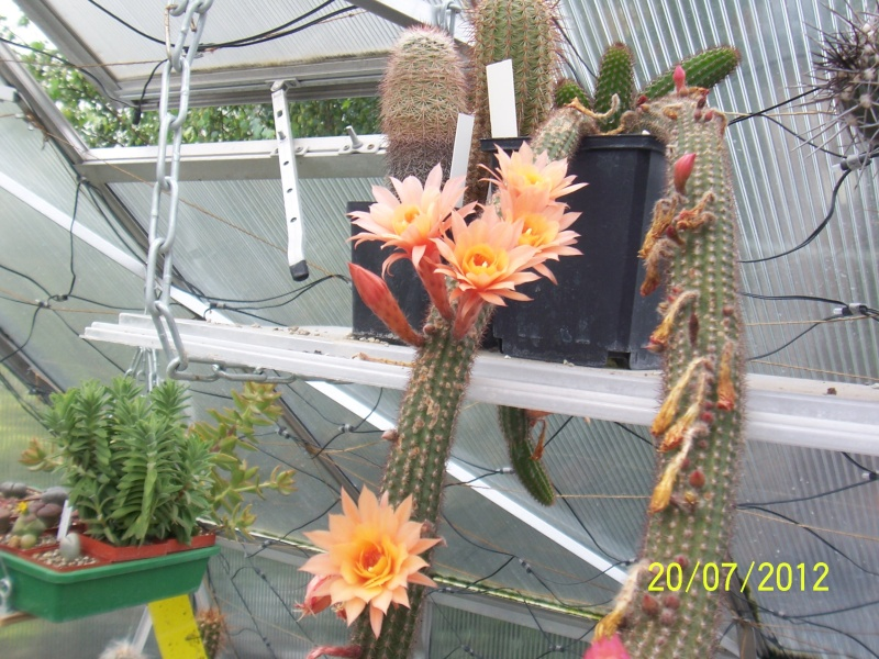 Cacti and Sukkulent in Köln, every day new flowers in the greenhouse Part 10  Bild6893
