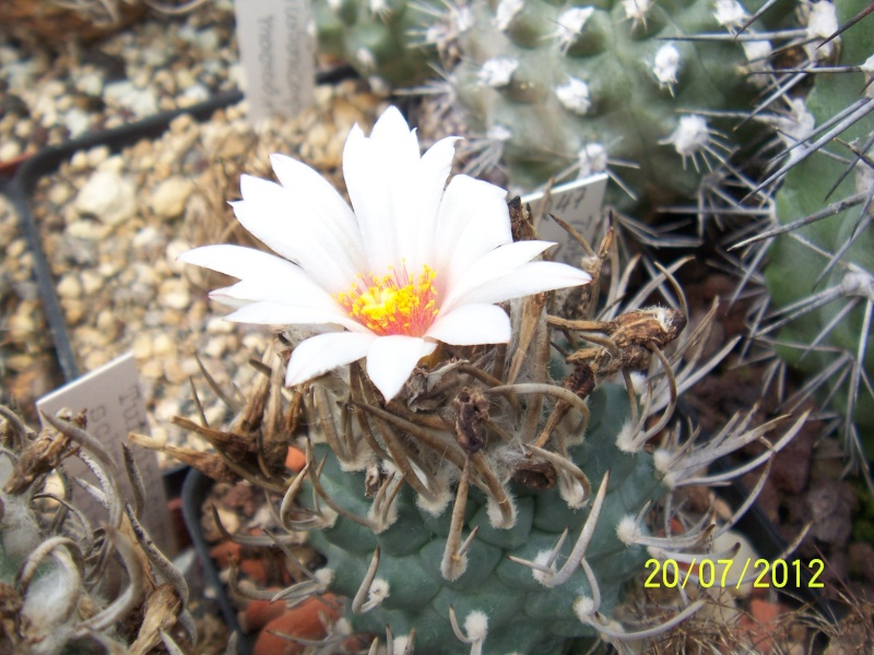 Cacti and Sukkulent in Köln, every day new flowers in the greenhouse Part 10  Bild6901