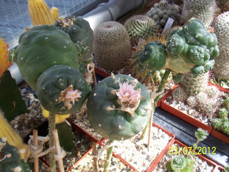 Cacti and Sukkulent in Köln, every day new flowers in the greenhouse Part 12 & 1/2   Bild6998