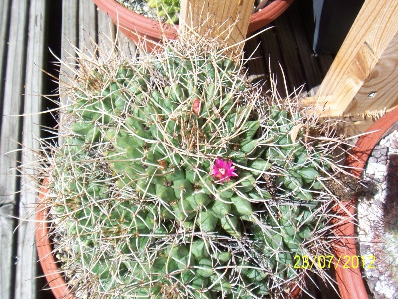 Cacti and Sukkulent in Köln, every day new flowers in the greenhouse Part 12 & 1/2   Bild7016