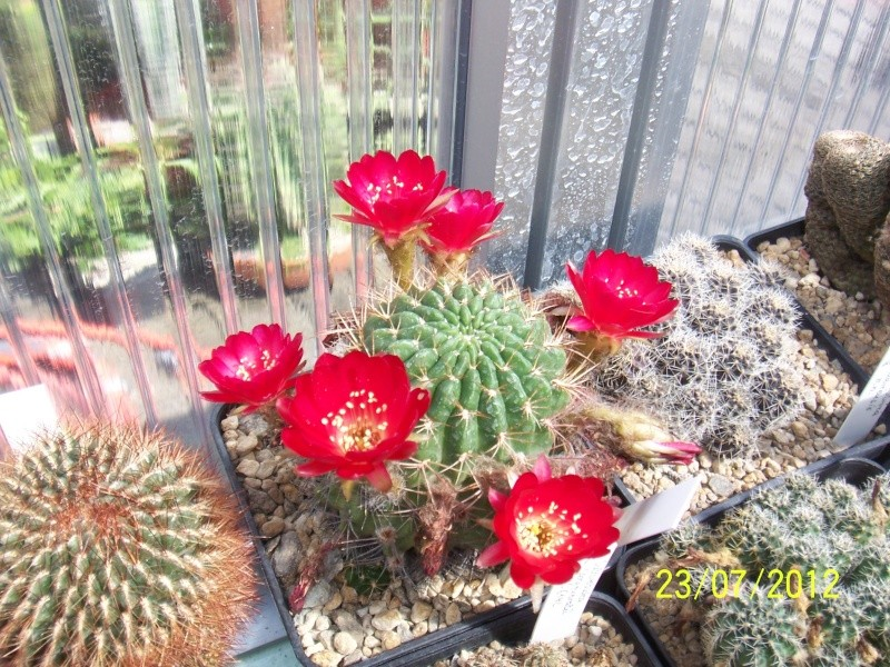Cacti and Sukkulent in Köln, every day new flowers in the greenhouse Part 12 & 1/2   Bild7021