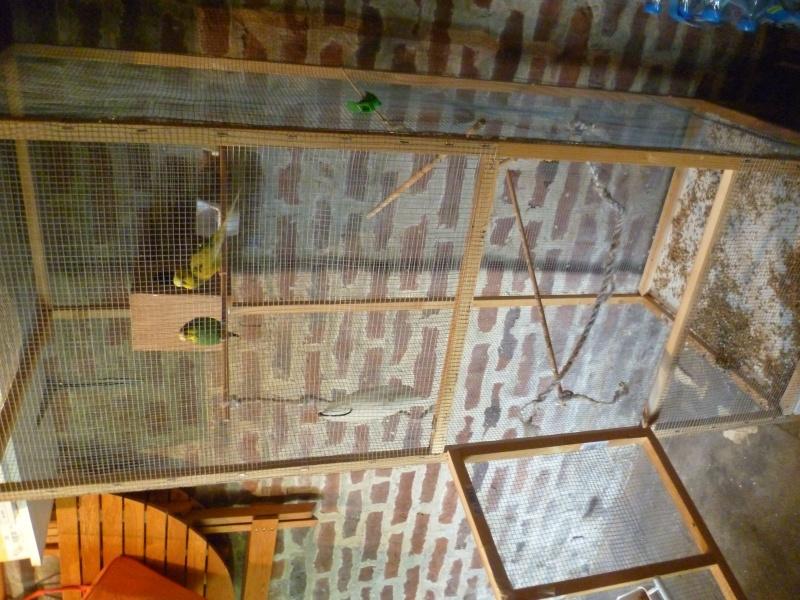 Combien de perruches peut contenir ma cage ? P1000512