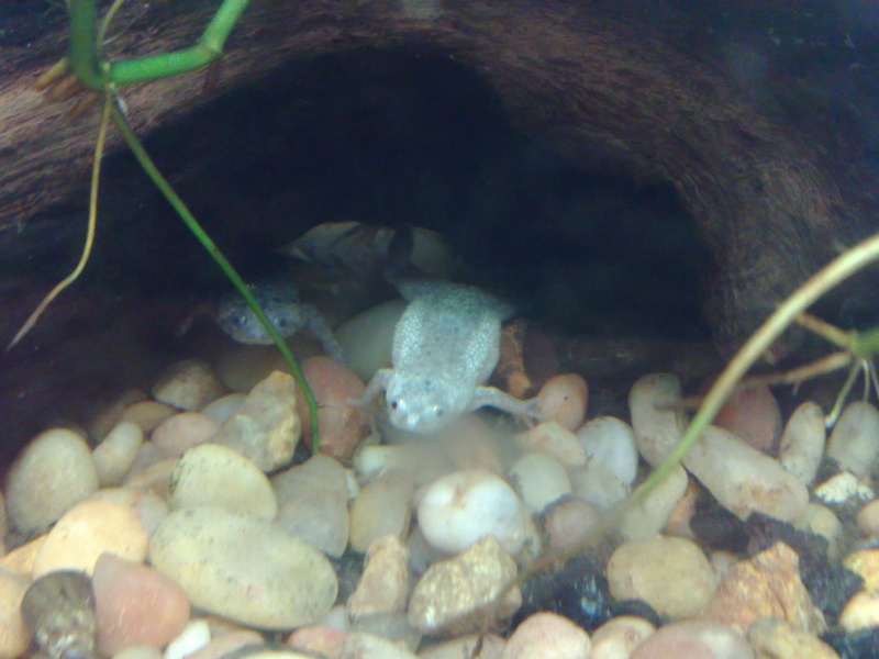 New addition to the frog tank 02062010