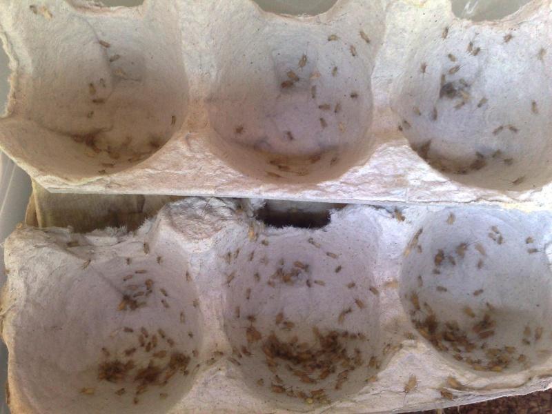 Shebeen's cricket colony C1010