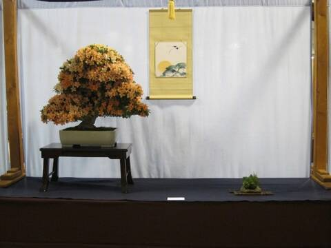 3rd Us National Bonsai Exhibition In Rochester Ny