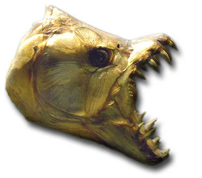 Hydrocynus goliath ouTigerfish Hydroc13