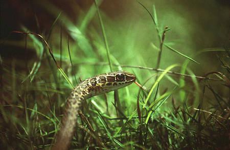 Les morsures de serpents dans le monde. Rtemag22