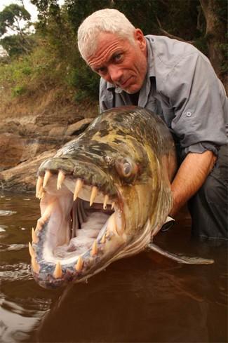 Hydrocynus goliath ouTigerfish Tiger-13