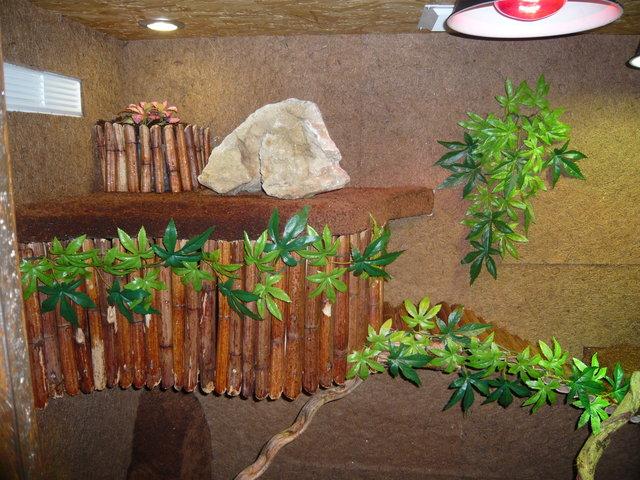 construction Terrarium pour mon Dragon d'eau! P1000610
