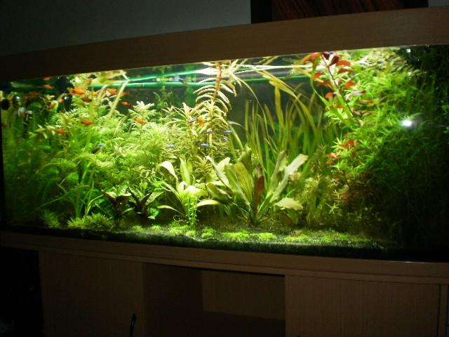Aquarium 400 litres bac planté P1010010