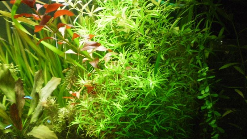 Aquarium 400 litres bac planté P1020011