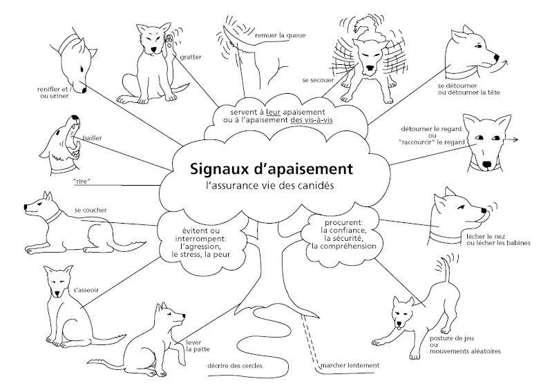 chien - Les signaux d'apaisement chez un chien  62227511