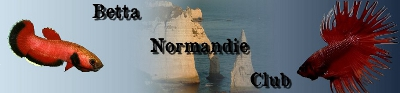 Club de Bettas Normands !