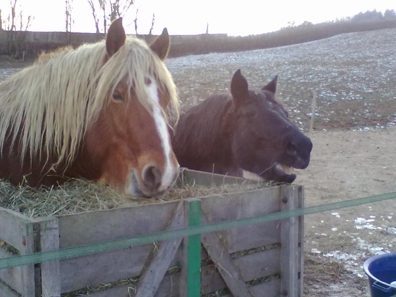 Theme de Mars : les grimaces de vos chevaux - Page 3 06022010