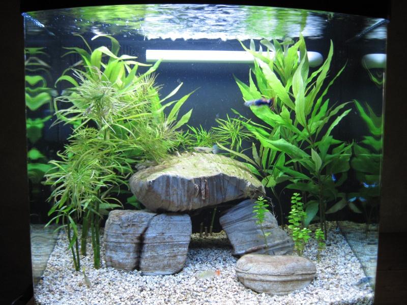 Première photo de mon aquarium Septem10
