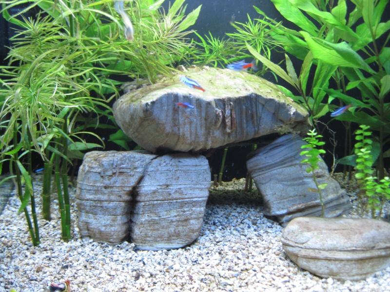 Première photo de mon aquarium Septem11