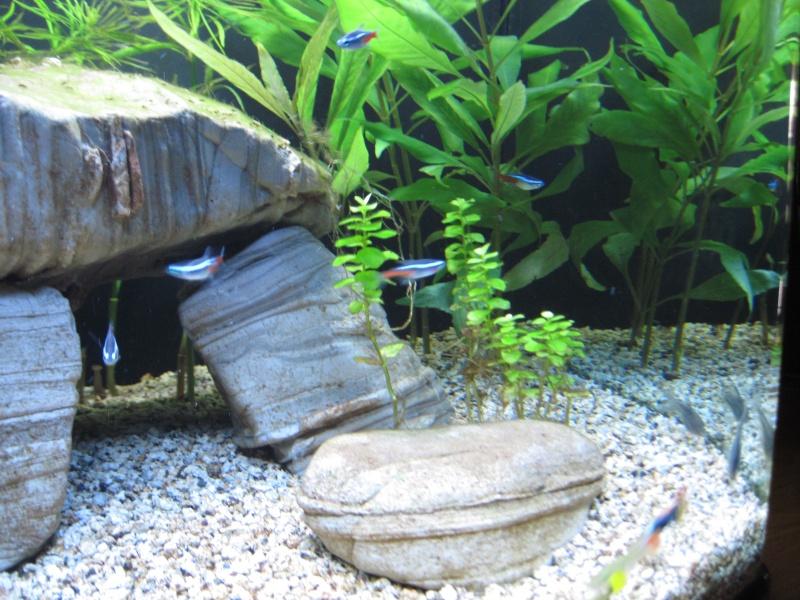 Première photo de mon aquarium Septem13